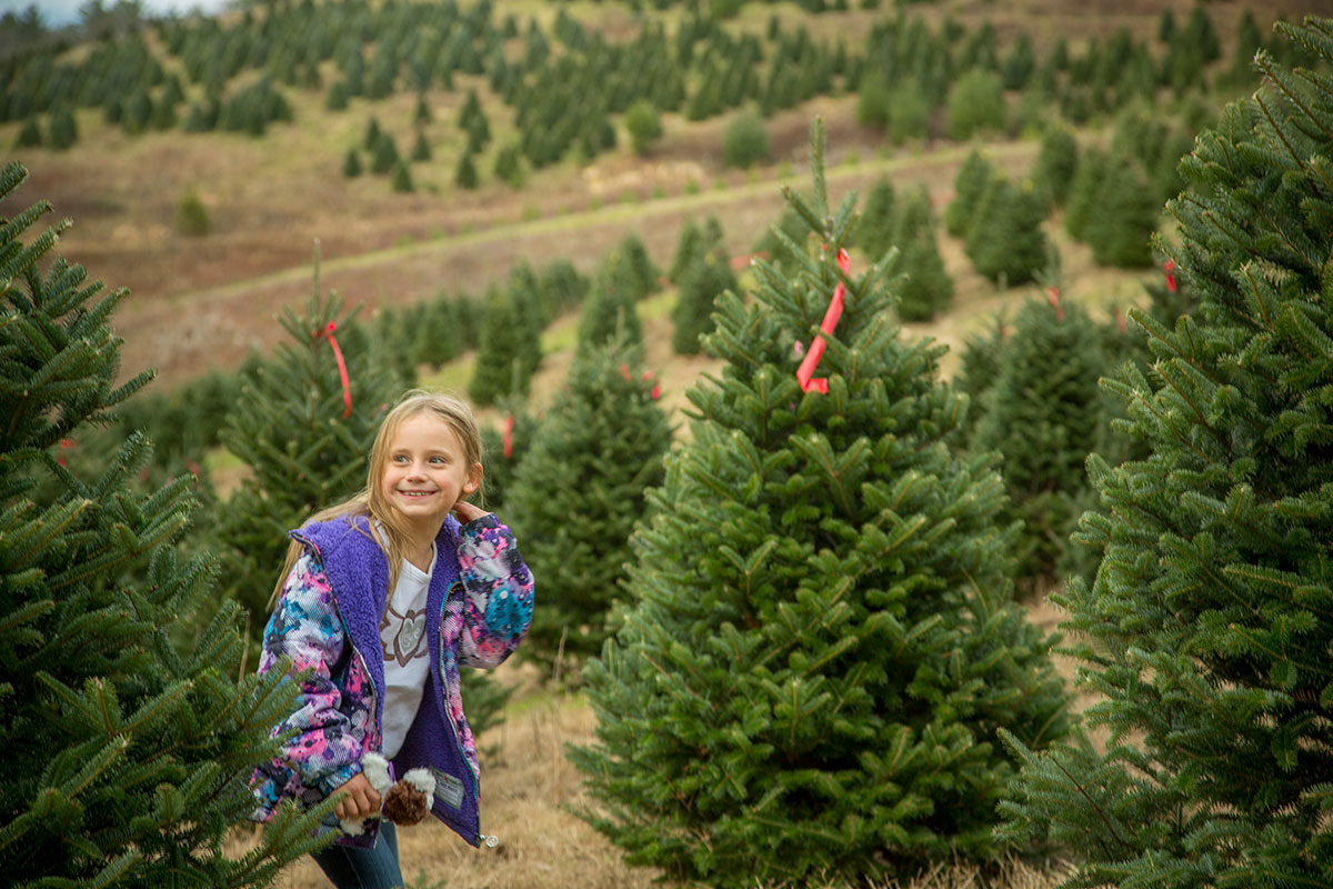 Girl picking out her tree